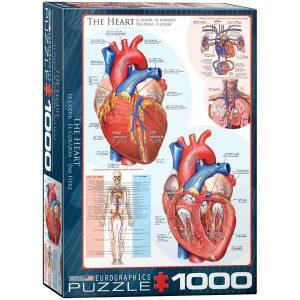 Puzzle partes del corazón