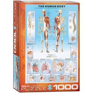 Puzzle el Cuerpo Humano