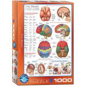 Puzzle Eurographics El cerebro humano